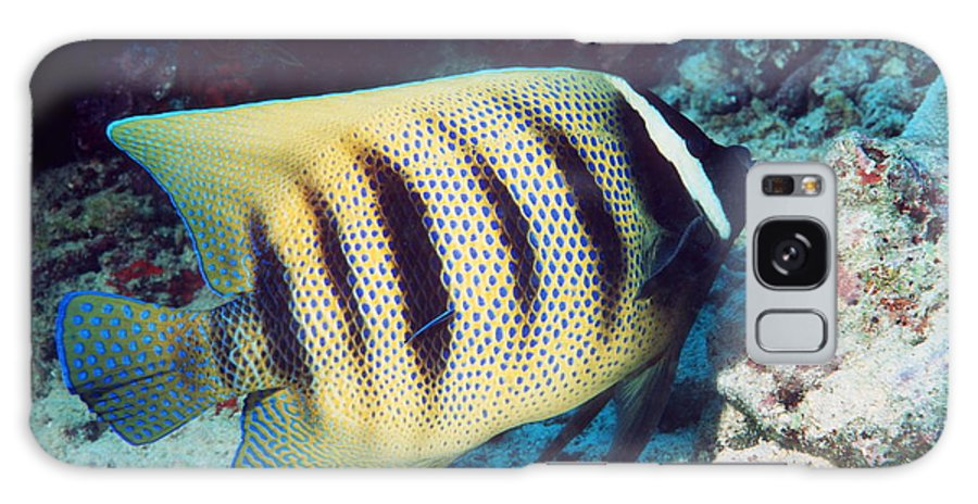 Pomacanthus Sexstriatus Galaxy S8 Case featuring the photograph Six-banded Angelfish by Georgette Douwma