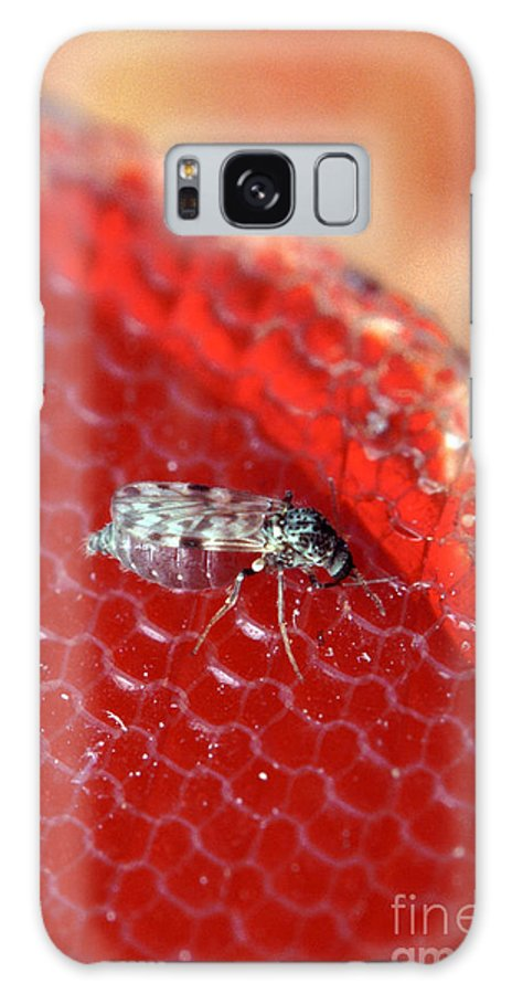 Female Biting Midge Galaxy S8 Case featuring the photograph Sixteenth-inch Long Female Biting Midge by Science Source