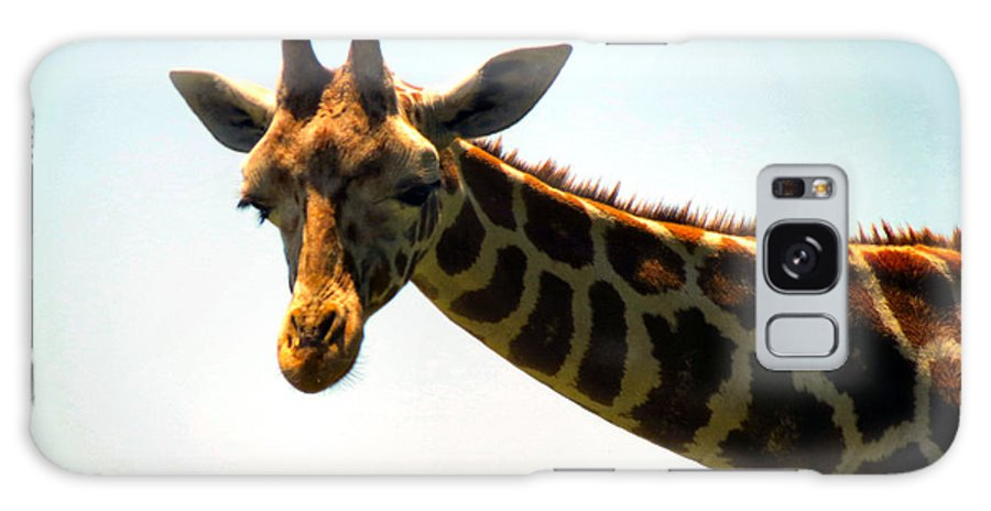 Giraffe Galaxy S8 Case featuring the photograph Sky High by Art Dingo