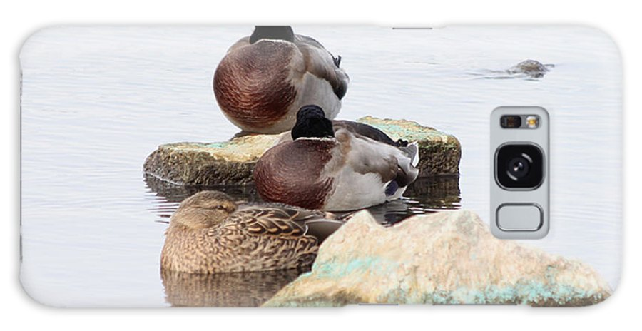 Mallard Galaxy S8 Case featuring the photograph Sleeping Mallards by Lori Tordsen