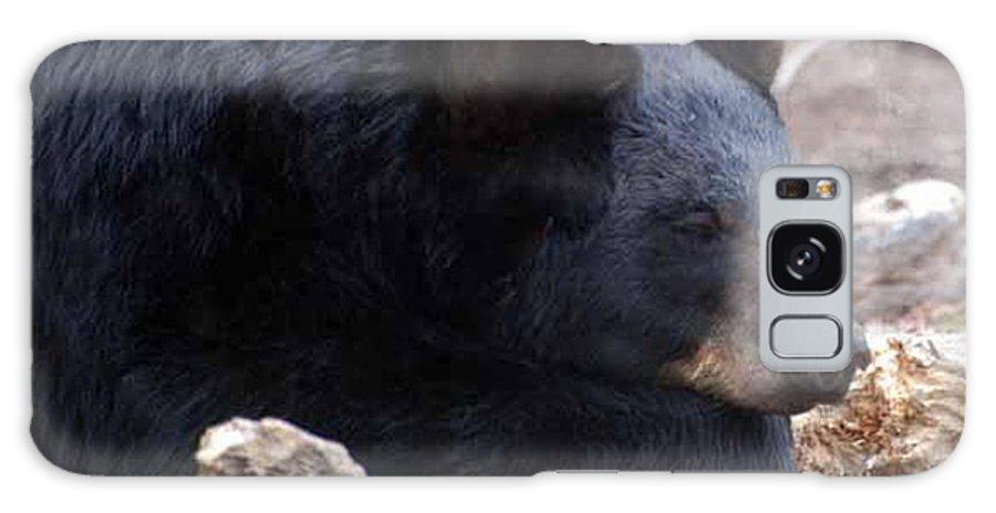Black Bear Galaxy S8 Case featuring the photograph Sleepy Black Bear by Paul Ward