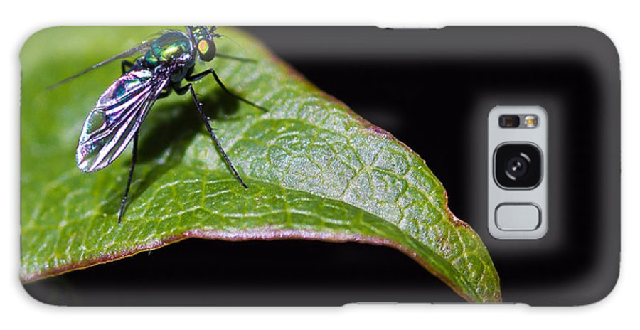 Small Green Fly 2 Galaxy S8 Case featuring the photograph Small Green Fly 2 by Mitch Shindelbower