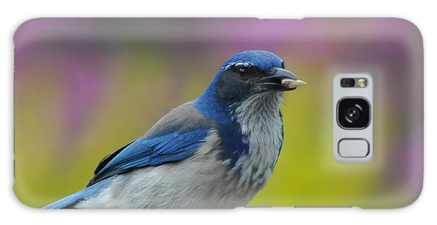 Blue Jay Galaxy S8 Case featuring the photograph Snack Time by Donna Blackhall