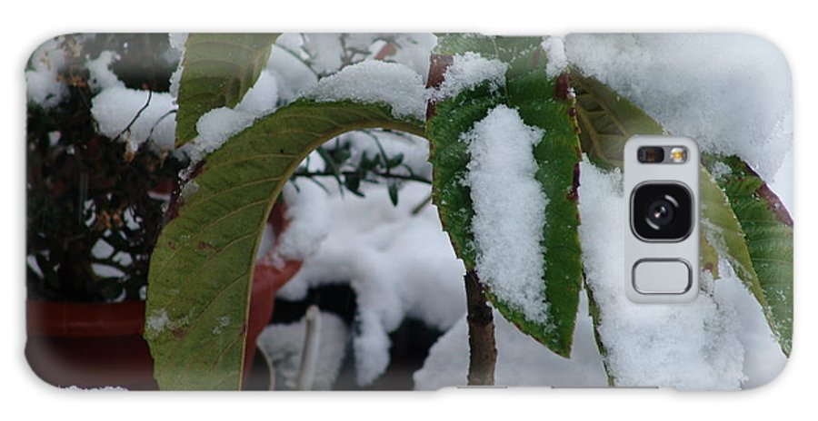 Snow Galaxy S8 Case featuring the photograph Snow Plant by Ashok Patel