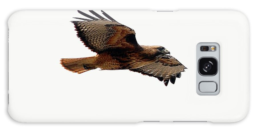 Hawks Galaxy S8 Case featuring the digital art Soaring Peacefully by Don Mann