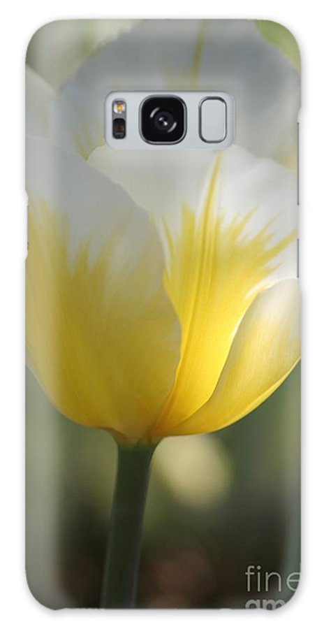 Tulip Galaxy S8 Case featuring the photograph Soft Glow by Living Color Photography Lorraine Lynch