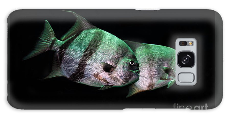 Fish Galaxy S8 Case featuring the photograph Something Fishy This Way Comes by Lois Bryan
