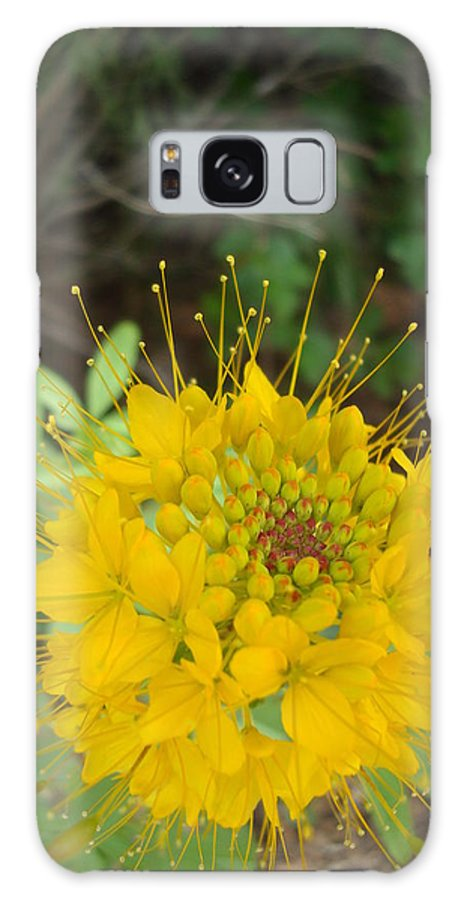 Nature Galaxy S8 Case featuring the photograph Yellow Bee Plant Sparks by Maili Page