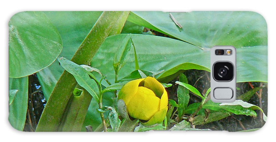Spatterdock Galaxy S8 Case featuring the photograph Spatterdock Wild Yellow Water Lily - Nuphar Lutea by Mother Nature