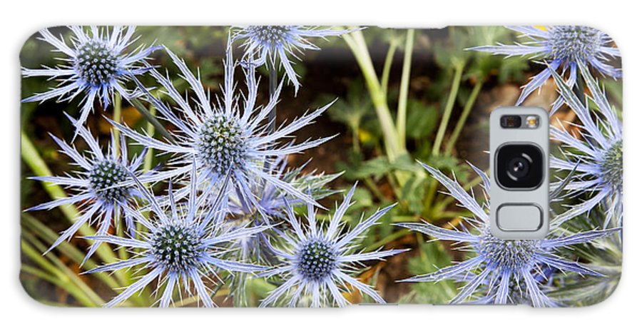 Blue Flowers Galaxy S8 Case featuring the photograph Spectacular by Kelley King