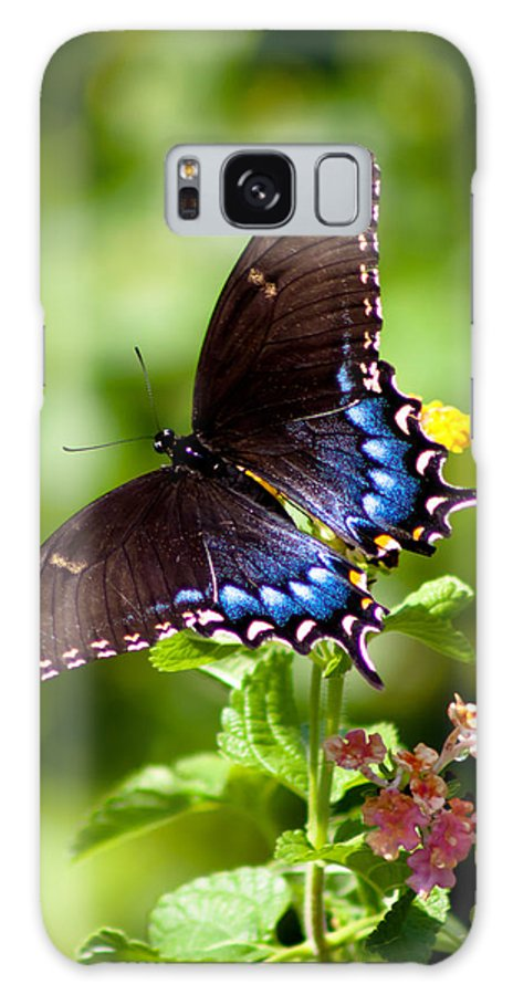 Butterfly Galaxy S8 Case featuring the photograph Spicebush Swallowtail by Lynne Jenkins