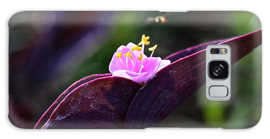 Plant Galaxy S8 Case featuring the photograph Spiderwort by Susan Herber