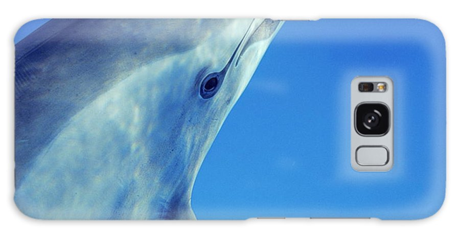 Stenella Longirostris Galaxy S8 Case featuring the photograph Spinner Dolphin by Alexis Rosenfeld
