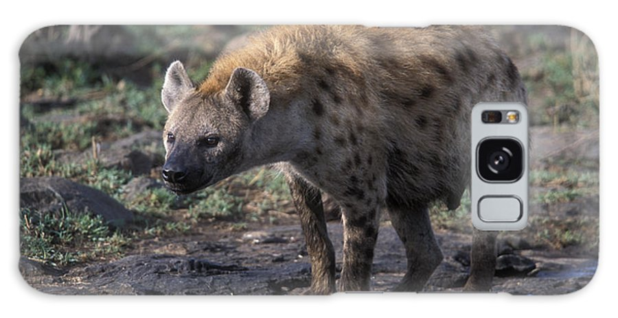 Africa Galaxy S8 Case featuring the photograph Spotted Hyena by Sandra Bronstein