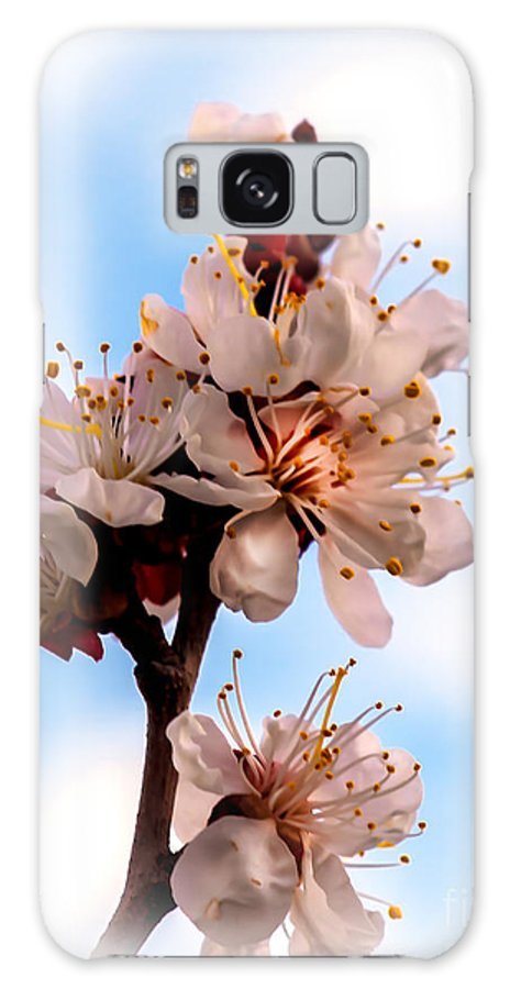 Flowers Galaxy S8 Case featuring the photograph Spring Time by Robert Bales