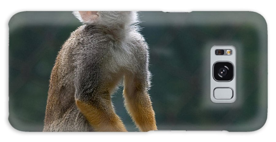 Squirrel Monkey Galaxy S8 Case featuring the photograph Squirrel Monkey by Cindy Haggerty
