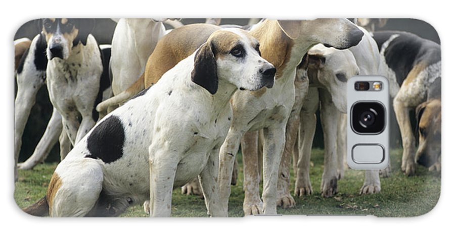 Stag Hound Galaxy S8 Case featuring the photograph Stag Hounds by David Aubrey