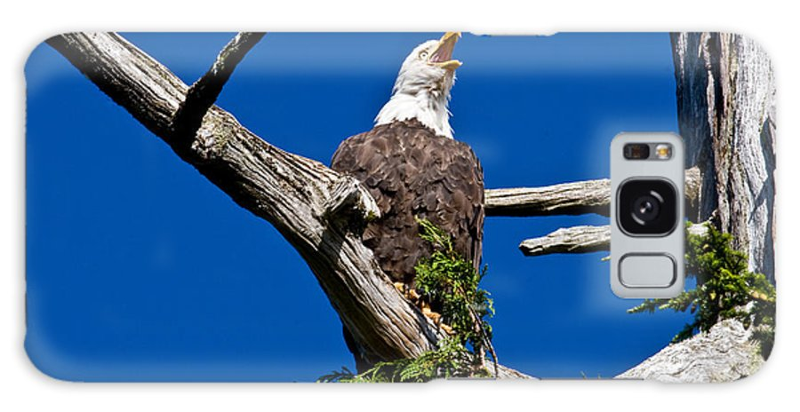 Animals Galaxy S8 Case featuring the photograph Squawking Alaskan Eagle by Jean Noren