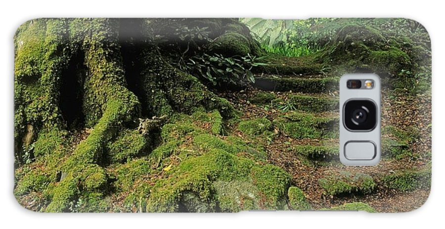Bog Galaxy S8 Case featuring the photograph Steps In The Wild Garden, Galnleam by The Irish Image Collection