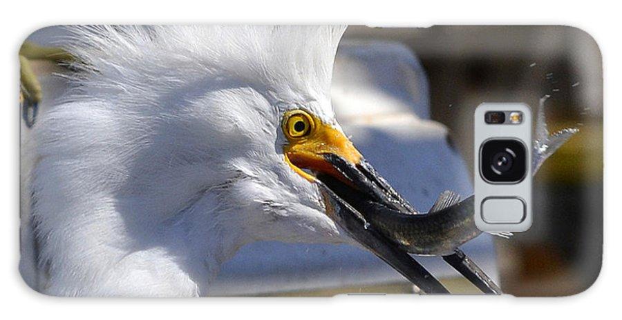 Snowy White Egret Galaxy S8 Case featuring the photograph Stolen Goods by Fraida Gutovich
