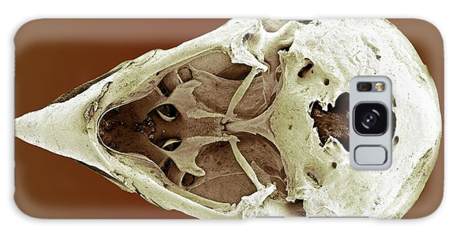 Lonchura Striata Galaxy S8 Case featuring the photograph Striated Finch Skull, Sem by Steve Gschmeissner