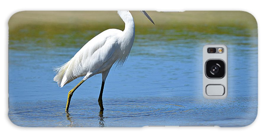 Snowy White Egret Galaxy S8 Case featuring the photograph Strut by Fraida Gutovich