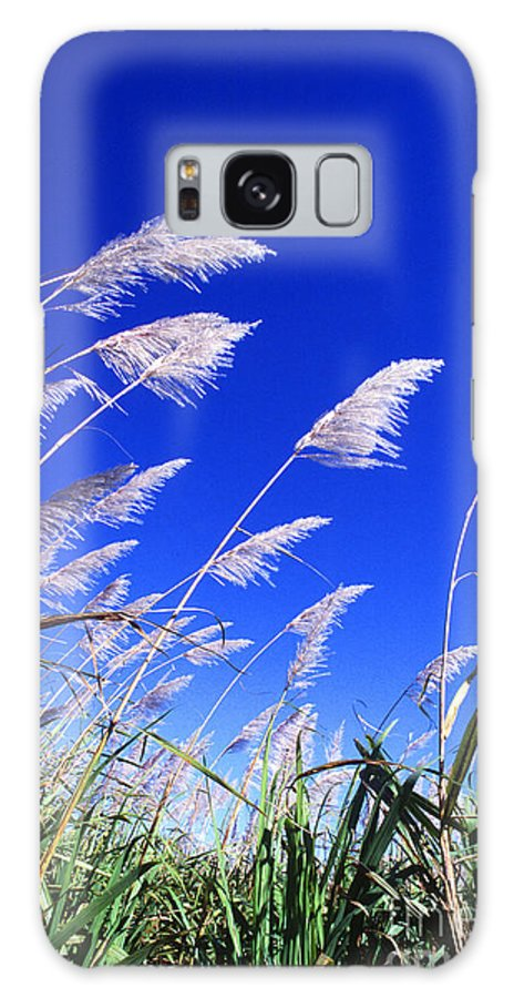 Sugar Galaxy S8 Case featuring the photograph Sugarcane by Photo Researchers