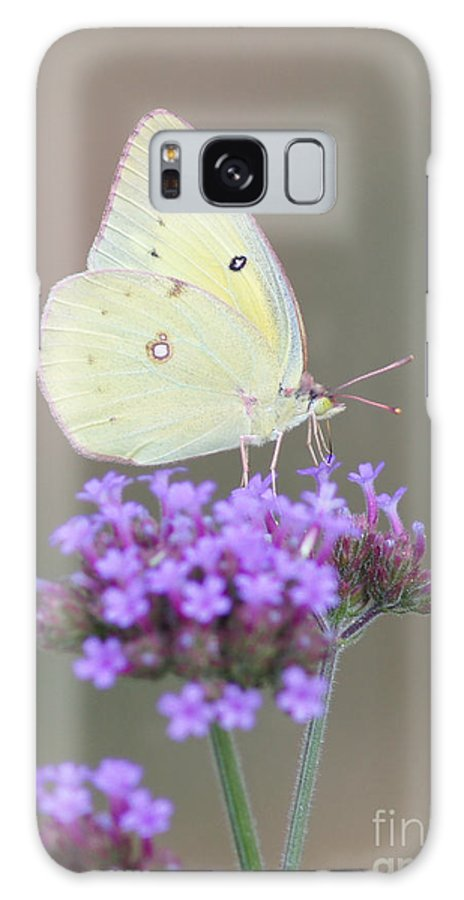 Sulphur Galaxy S8 Case featuring the photograph Sulphur On Verbena by Robert E Alter Reflections of Infinity