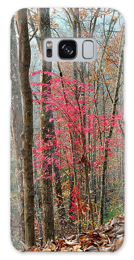 Trees Galaxy S8 Case featuring the photograph Sumac In Morning Light At Cumberland Falls State Park by Greg Matchick