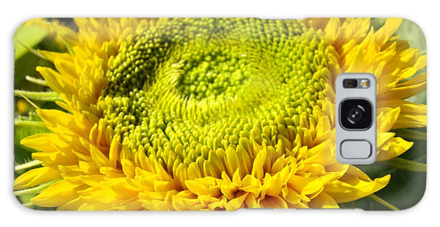 Sunflower Galaxy S8 Case featuring the photograph Summer Floral Art Prints Yellow Sunflower by Baslee Troutman