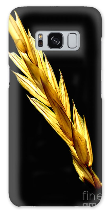 Grass Seed Head Galaxy S8 Case featuring the photograph Summer Grass by Thomas R Fletcher