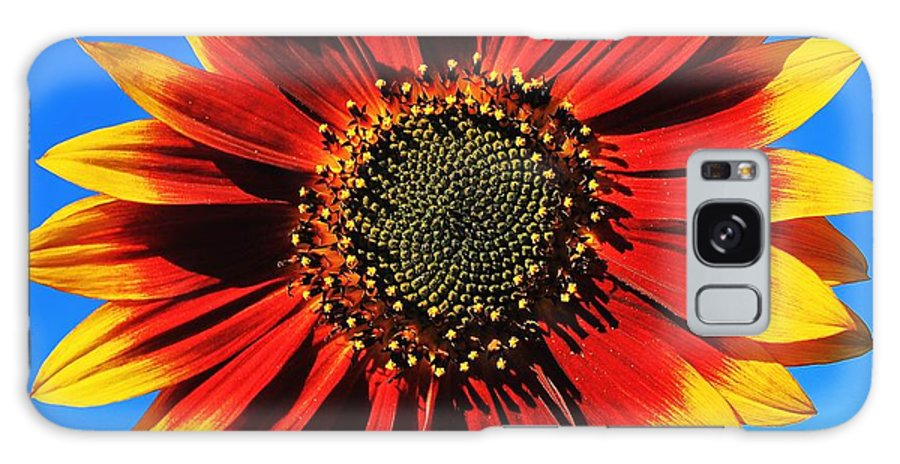 Sunflower Galaxy S8 Case featuring the photograph Summerflower by Benjamin Yeager
