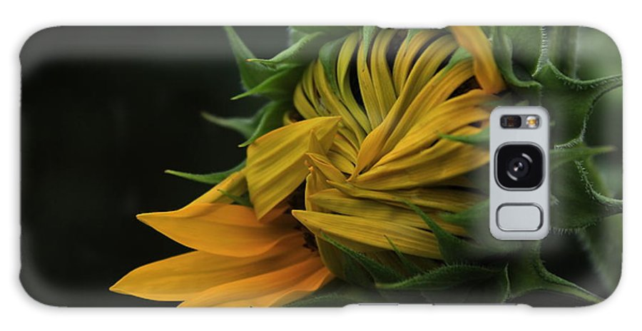 Sun Galaxy S8 Case featuring the photograph Sunflower 2012 by Marjorie Imbeau