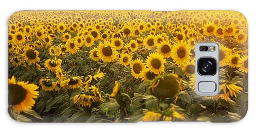 Color Galaxy S8 Case featuring the photograph Sunflower Field by The Irish Image Collection