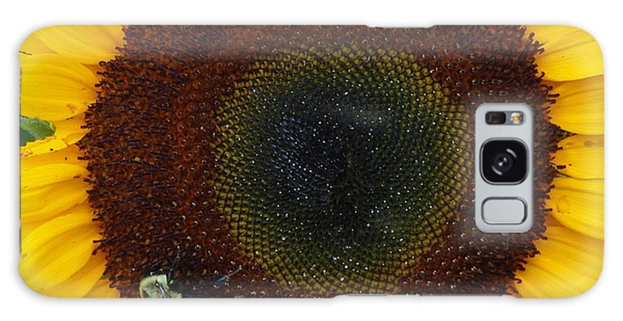 Sunflower Galaxy S8 Case featuring the photograph Sunflower Gathering by Ian Mcadie