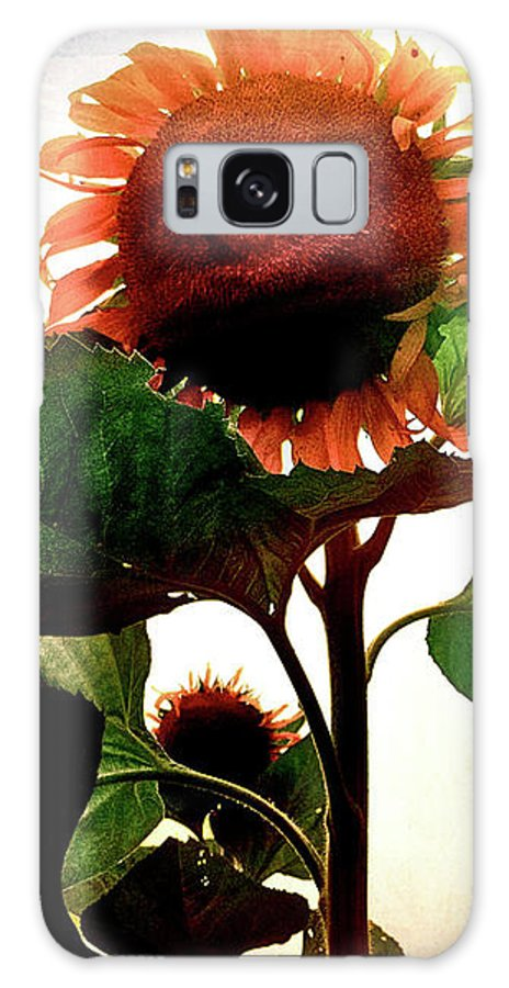 Sunflower Galaxy S8 Case featuring the photograph The Business Of Bees by Kevyn Bashore