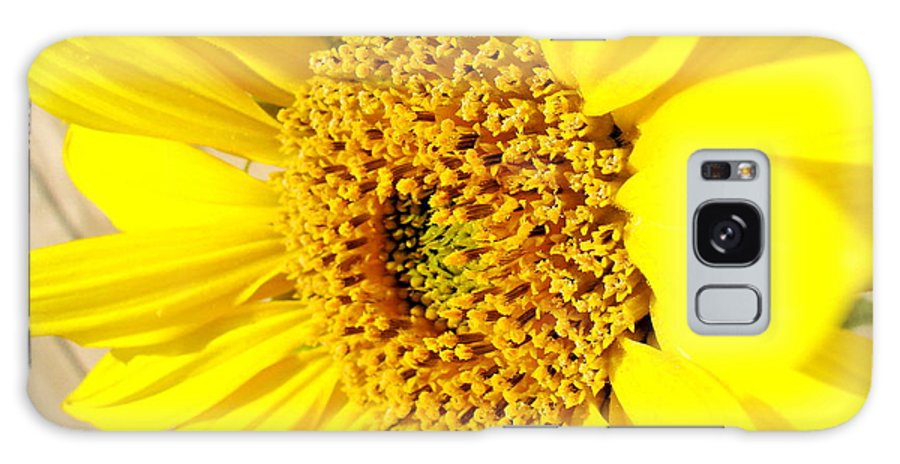 Sunflower Joy Galaxy S8 Case featuring the photograph Sunflower Joy by Laurisa Rabins