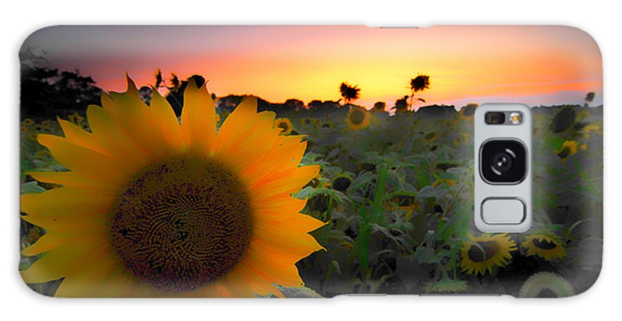 Sunflowers And Smooth Sunshine Galaxy S8 Case featuring the photograph Sunflower Smoothie by Randall Branham