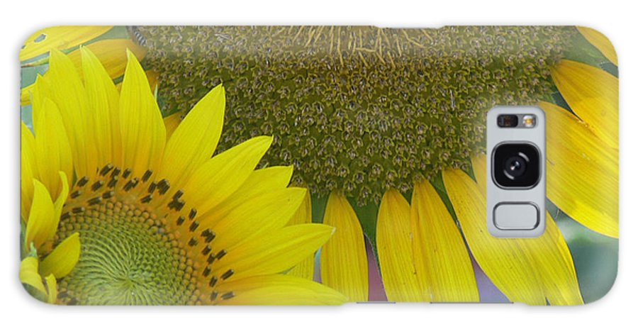 Sunflower Galaxy S8 Case featuring the photograph Sunflowers by Ericamaxine Price