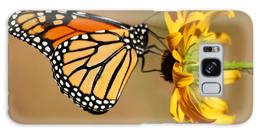 Butterfly Galaxy S8 Case featuring the photograph Sunlight Colors by Adam Jewell