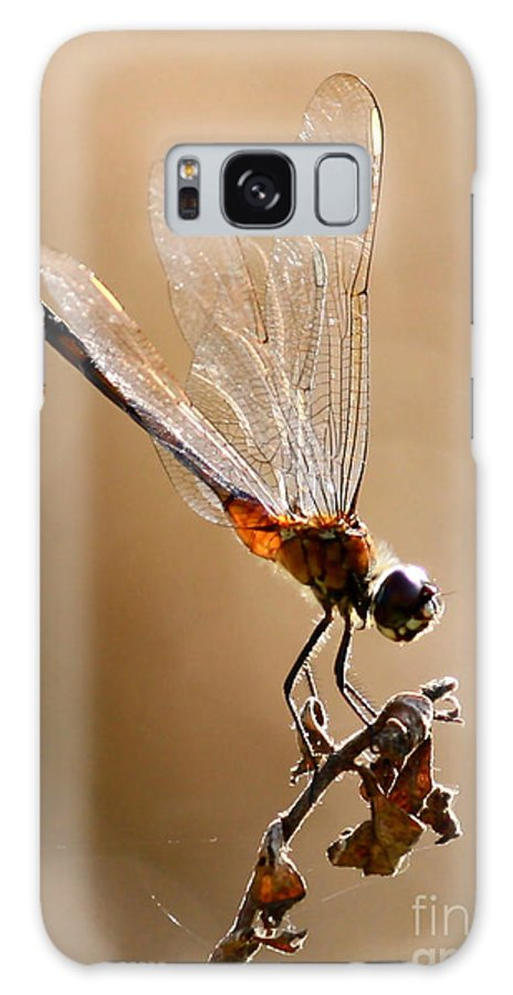 Dragonfly Galaxy S8 Case featuring the photograph Sunlight Through Golden Wings by Carol Groenen