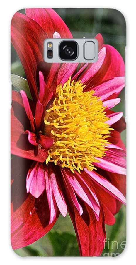 Outdoors Galaxy S8 Case featuring the photograph Sunny Center by Susan Herber