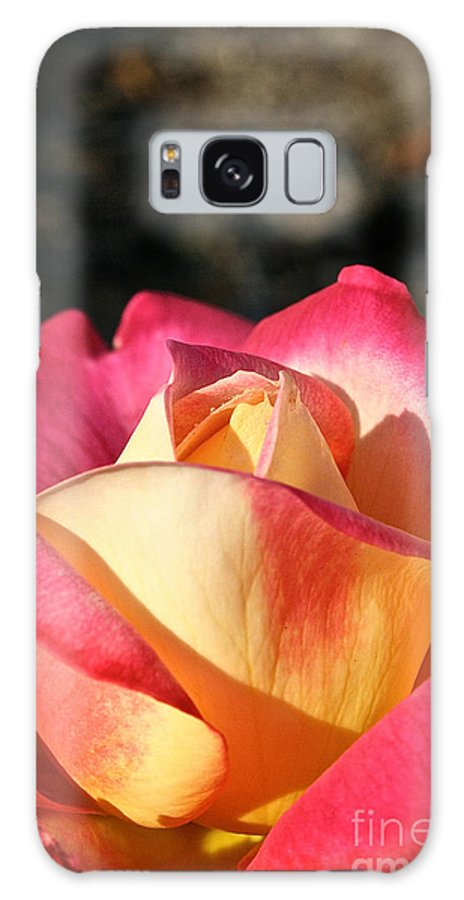 Outdoors Galaxy S8 Case featuring the photograph Sunny Opening by Susan Herber
