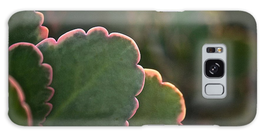 Plant Galaxy S8 Case featuring the photograph Sunset Succulents by Susan Herber