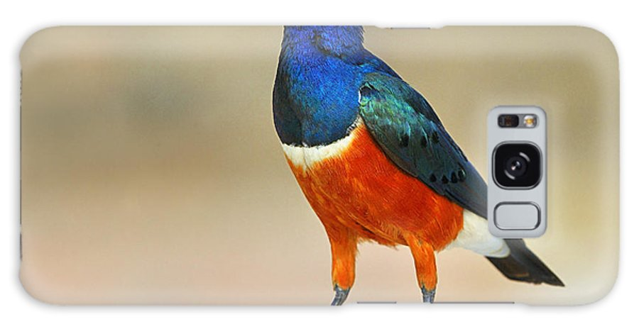 Superb Starling Galaxy S8 Case featuring the photograph Superb by Tony Beck