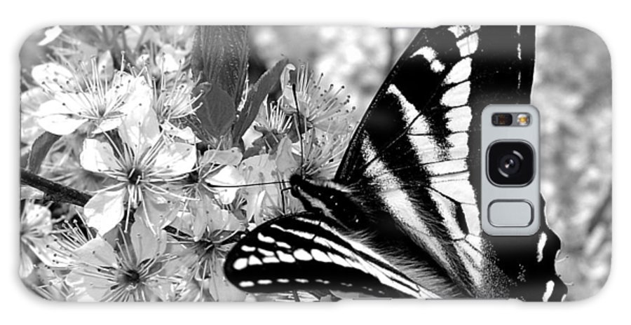 Black And White Galaxy S8 Case featuring the photograph Swallowtail Butterfly And Plum Blossoms by Karon Melillo DeVega