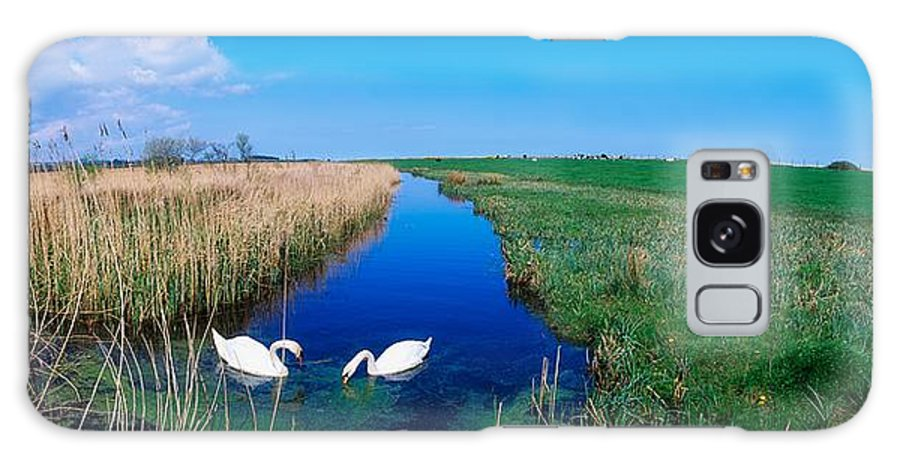 Birds Galaxy S8 Case featuring the photograph Swans On Bog, Near Newcastle, Co by The Irish Image Collection