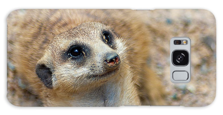 Meerkat Galaxy S8 Case featuring the photograph Sweet Meerkat Face by Carolyn Marshall