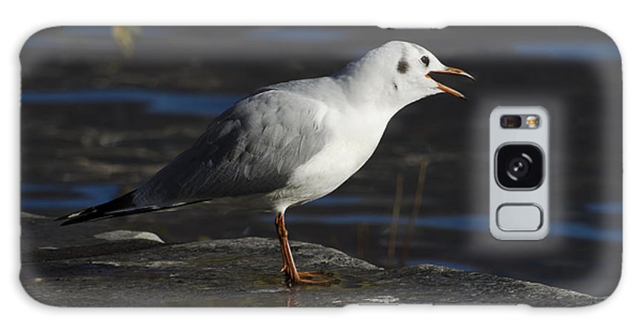 Seagull Galaxy S8 Case featuring the photograph Talking Bird by Mats Silvan