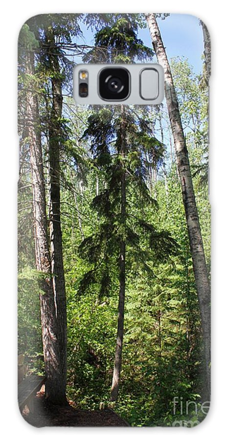 Hiking Galaxy S8 Case featuring the photograph Tall Trees by Jim Sauchyn
